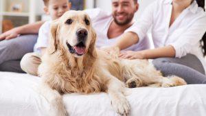 Dog as member of family