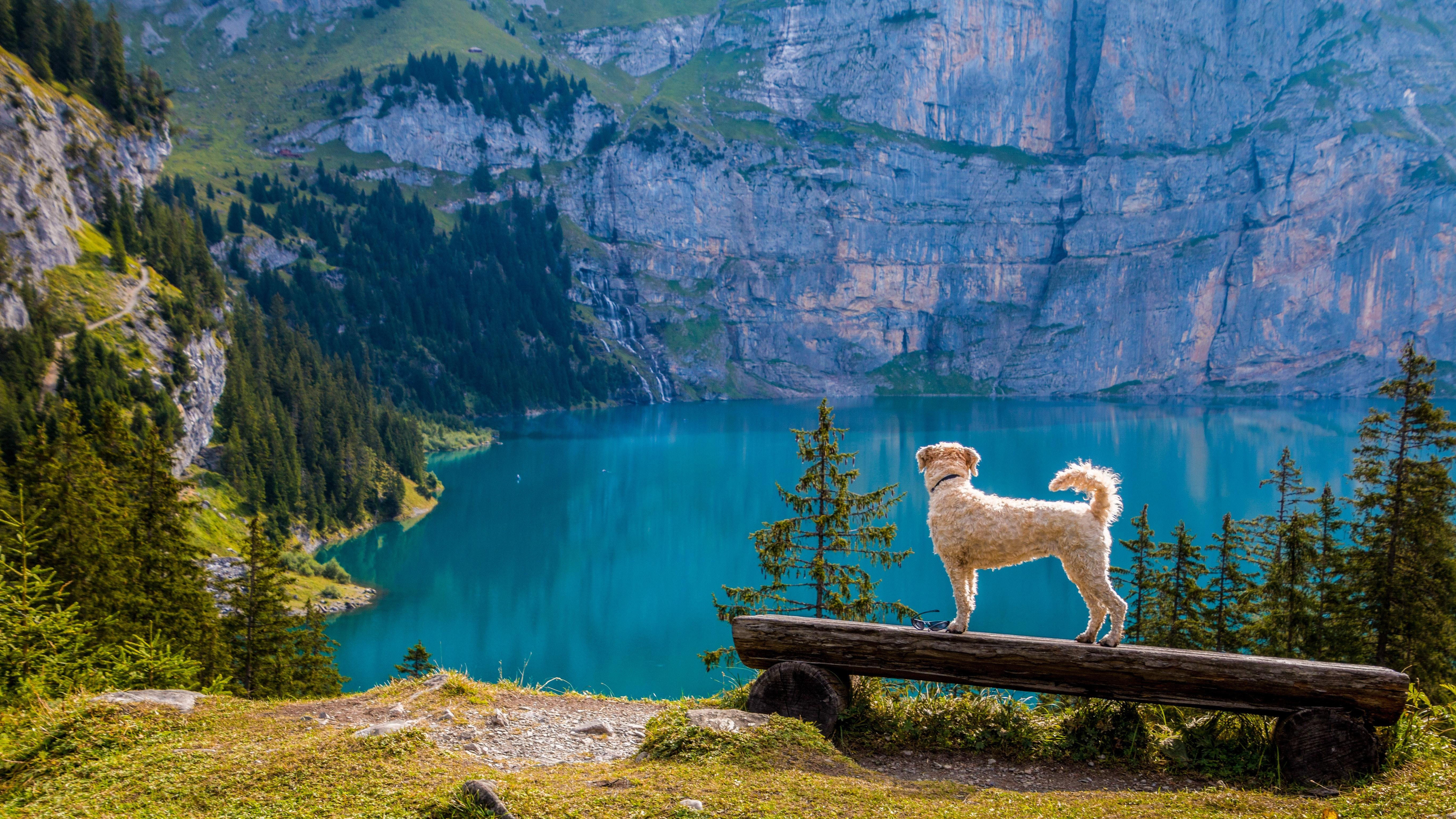 En hund som nyter utsikten.